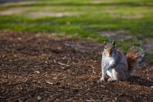 Das Tier, was in Englisch wie nen Staubwedel klingt - Foto: Anna Spindelndreier